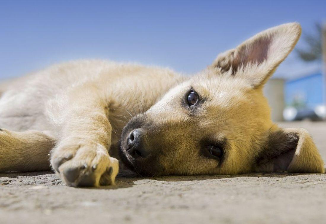 Жители райцентра Пензенской области возмущены убийством щенка