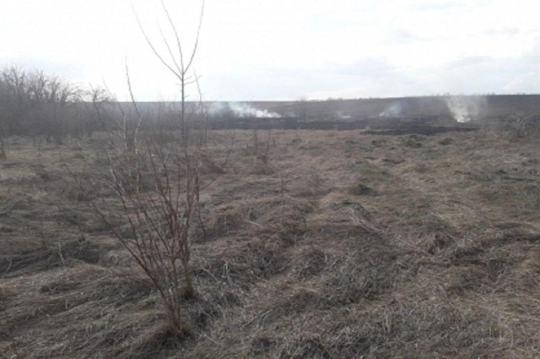 Появились подробности гибели мужчины на загоревшемся поле в Пензенской области